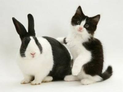 look alike bunny and cat