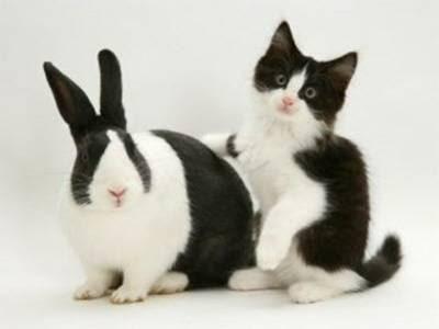 look alike bunny and cat
