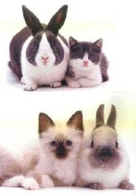 look alike bunnies and cats