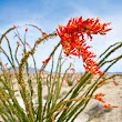 Four Hour Tour of Anza Borrego