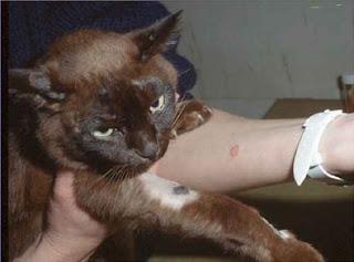 roy catlovers BPP: penyakit pada kucing
