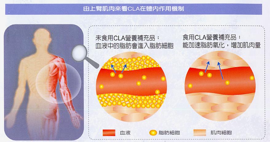 i-Good Life 營養字典 Nutrition Dic: 火速雕塑你的身材曲線CLA 共軛亞麻油酸