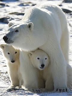 mother & cubs