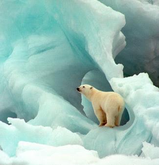ice and polar bear