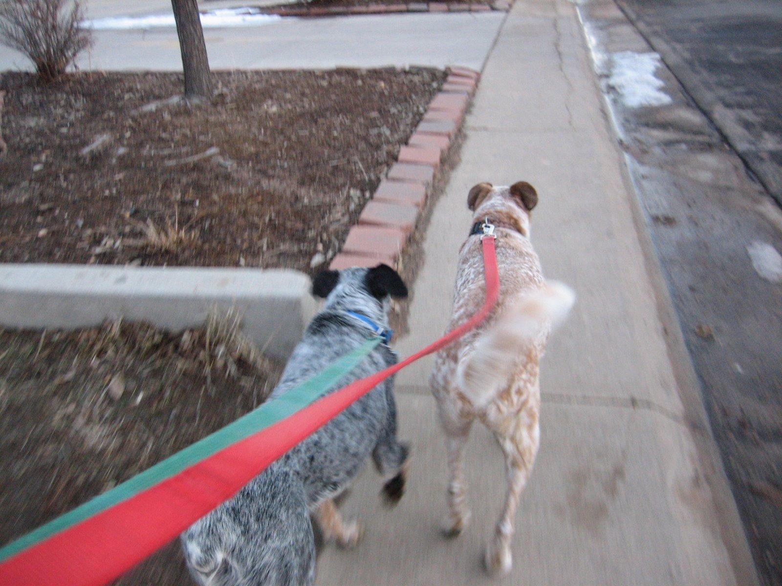 [dogswalk]