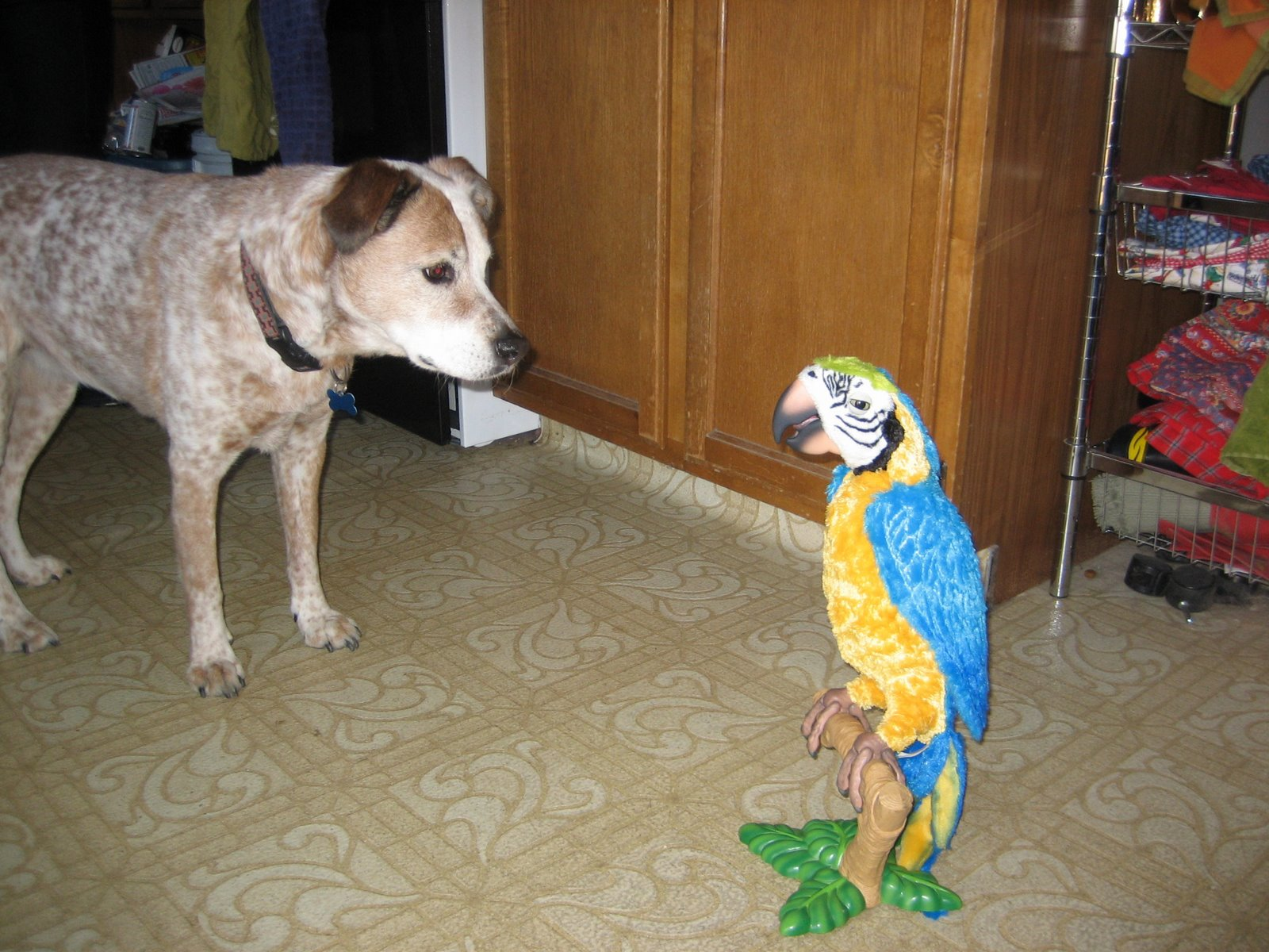 [squawk2]