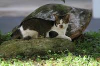 Meow Meow ! My Friendly Neighbourhood Cats