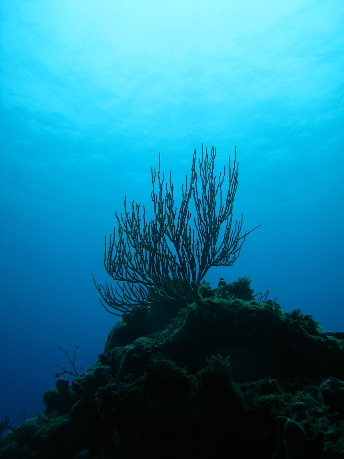 Marine Life Of Puerto Rico: Reefscapes