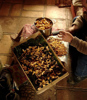 Cleaning Spring Chanterelles or Girolles