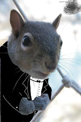 Animals in Tuxedos