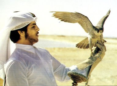 Qatar falcons