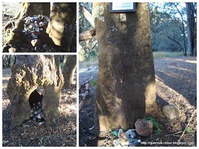 Basura encontrada y separada en Cerro Viejo