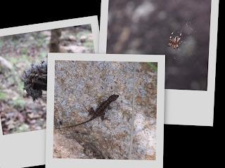 Fauna en el Cerro Jacal de Piedra