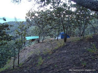 Refugio Aéreo y casa de campaña en el bosque de encino