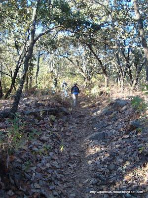 Bosque de Roble en el Cerro Viejo