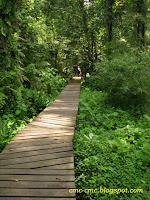 Wooden walkway above the wetland