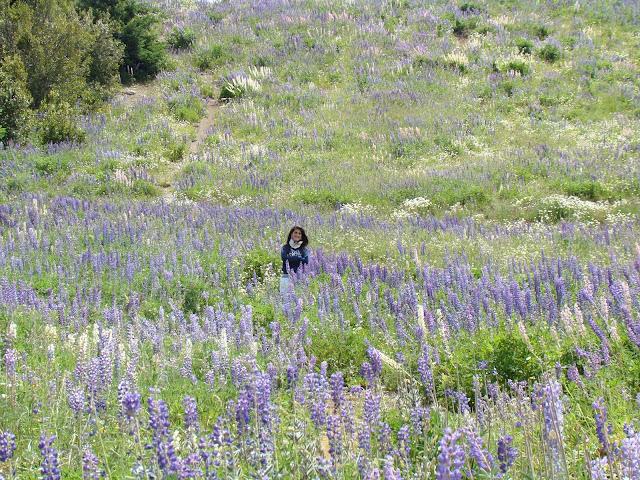 Flores de la Patagonia, Argentina, Elisa N, Blog de Viajes, Lifestyle, Travel