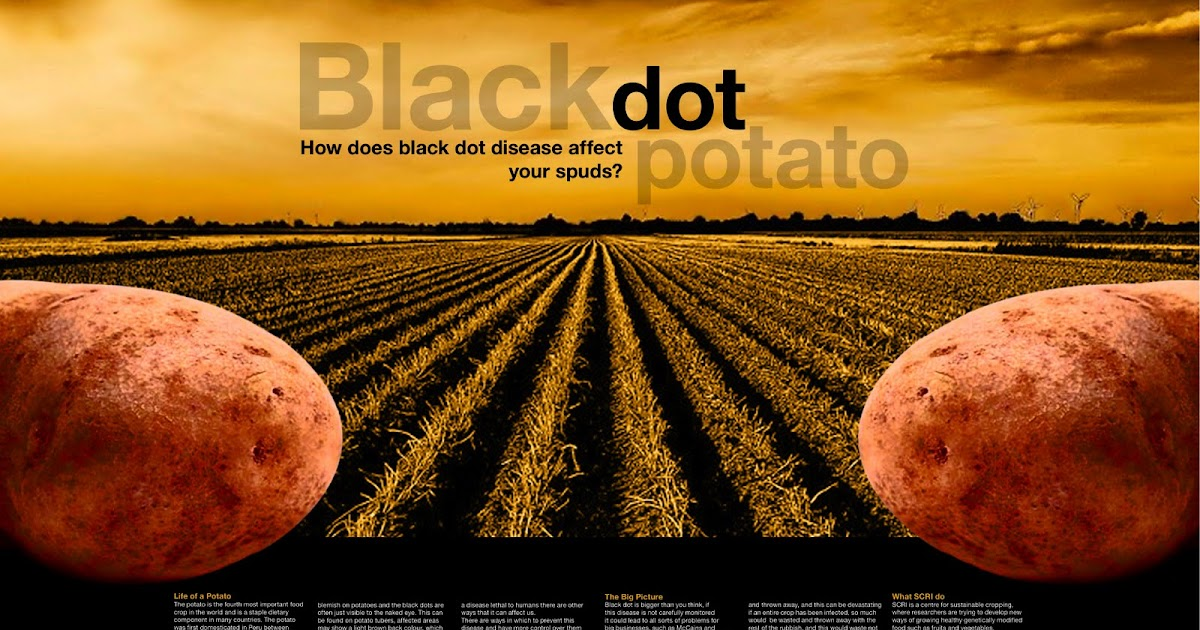 Image result for potato black dot disease