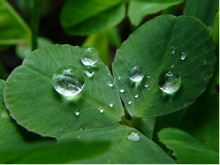 Вода - чистота и минерализация воды