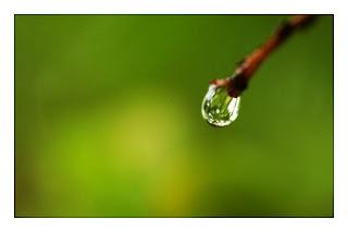 Вода - поверхностное натяжение воды