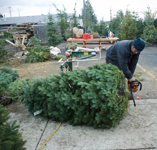 Local Christmas Trees: Sweet Life In The : Local * Christmas Trees At Sun River