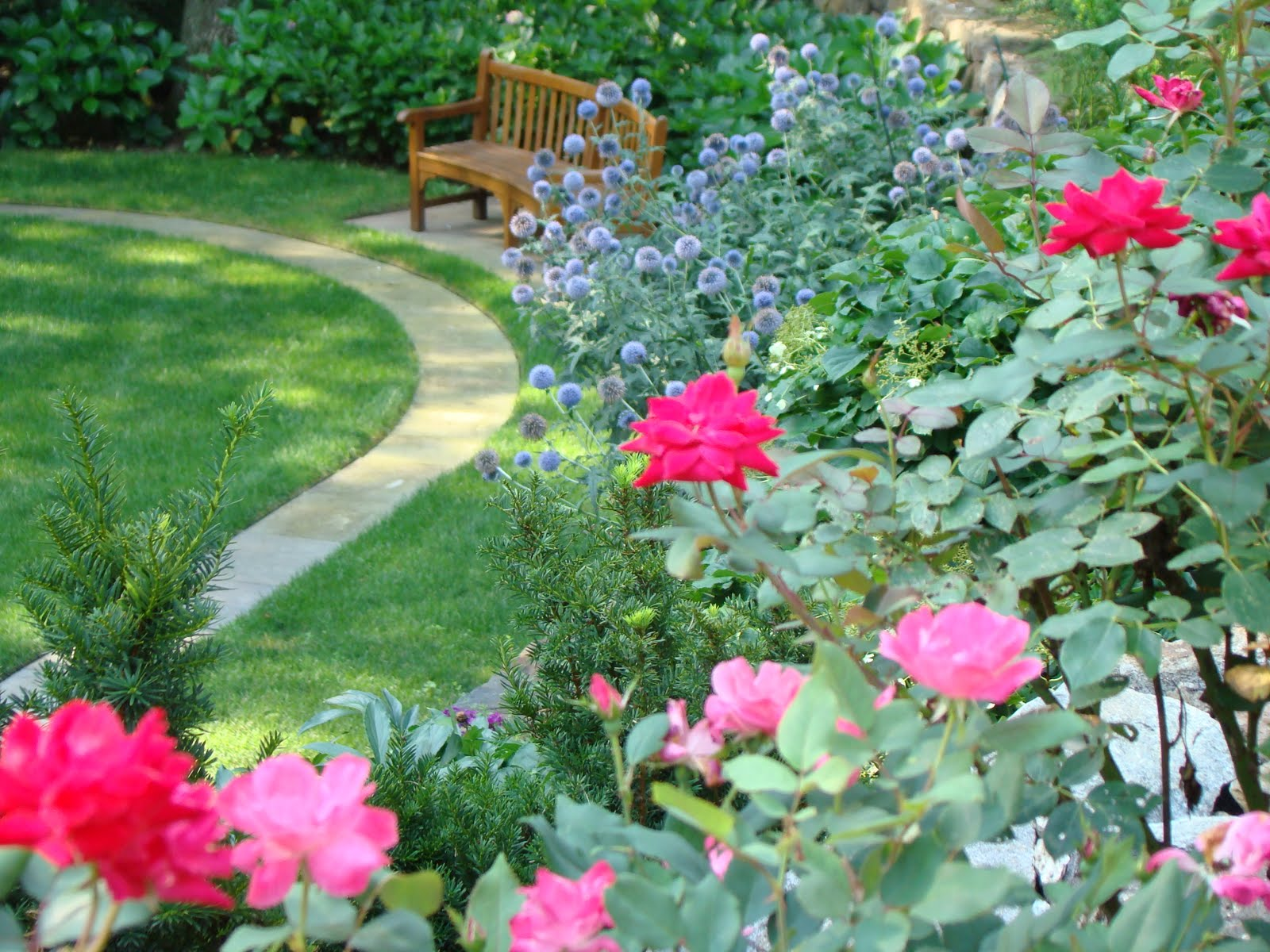 Landscape Plans With Knockout Roses Small Front Yard Landscape Ideas