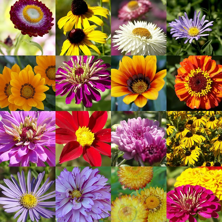 Summer Flowers Enter Laughing