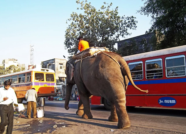 elephant walking on side of road