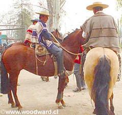 abb93a90a0aee colchagua-cachapoal-y-cardenal-caro  Aperos del Huaso Chileno