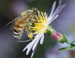 Kata hati: Filosofi Lebah dalam hidup