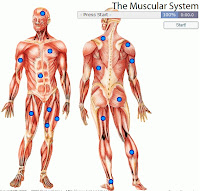 Muscular System Label Game