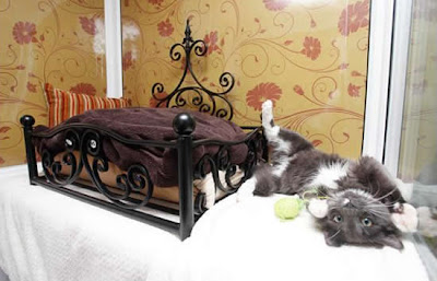 luxury Hotels for cat