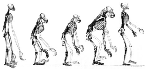 The Presurfer: Charles Darwin And The Theory Of Evolution