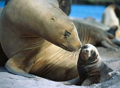motherlove - Mother's Love in animals (Dabbang Muqaabla 3)