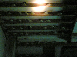 Swiftlet Farm with many nests