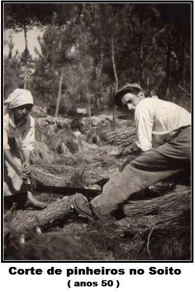 A silvicultura em Mouraz