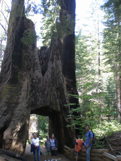 paso entremedio de Sequoia, Sequoia agujereada