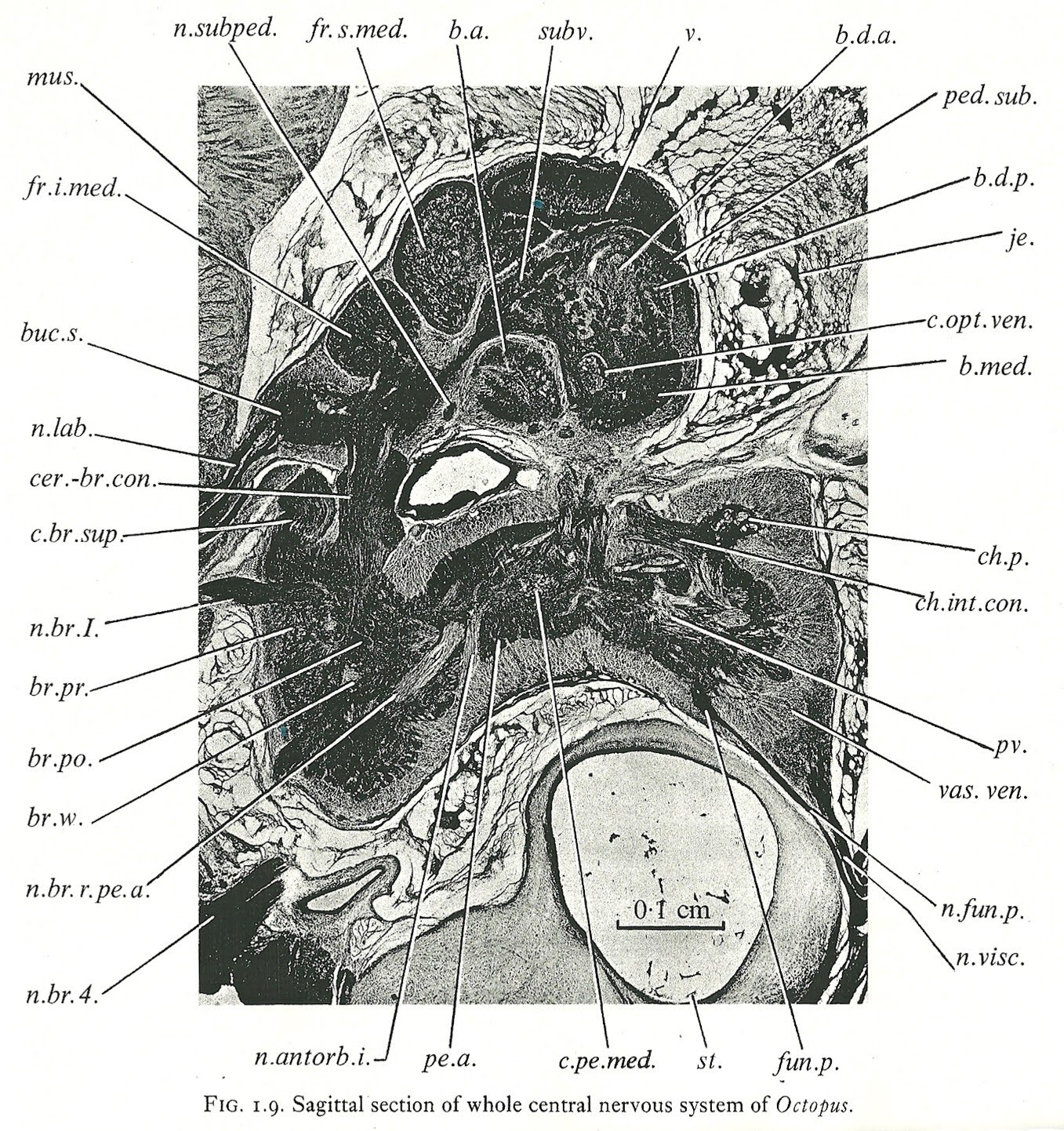 Labeled Diagram Of Octopus 2000 Saturn Sl2 Radio Wiring Cephalove A View The Brain Wednesday June 9 2010