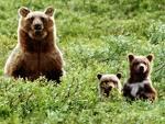 Os ursos - amigos Ursos.