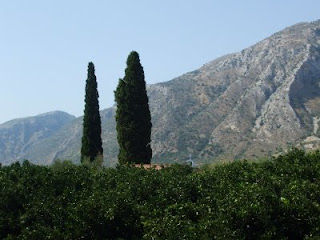 the orange orchard, cypress trees (which are usually planted near churches and cemeteries), and the mountains
