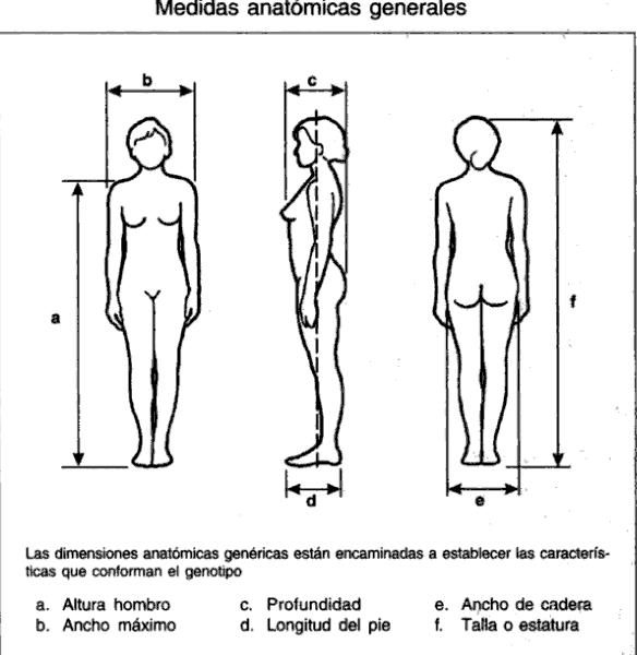 Que es la antropometria for Medidas ergonomicas del cuerpo humano