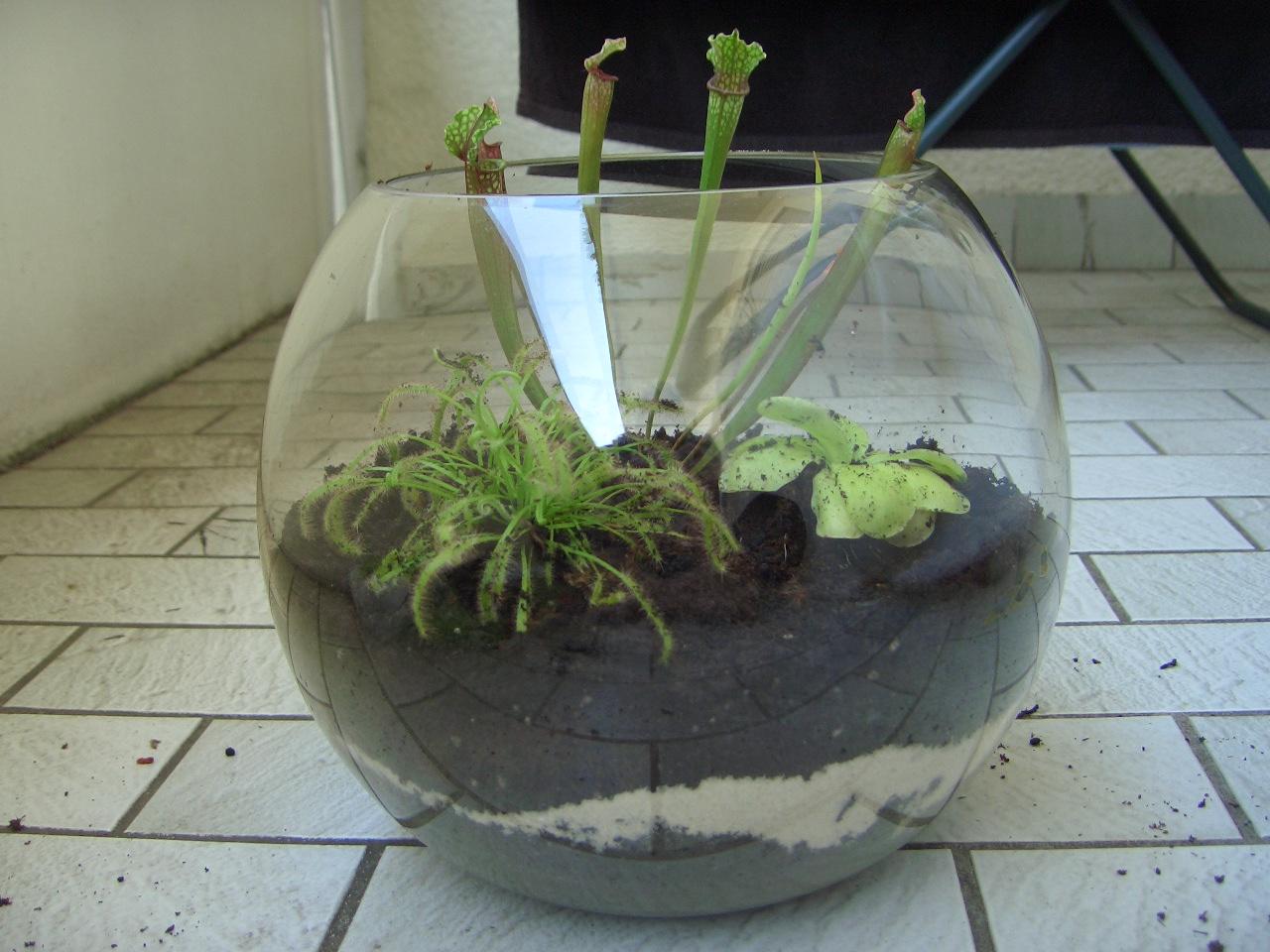 blumen im glas pflanzen osterdeko hyazinthen im glas dekoration pinterest. Black Bedroom Furniture Sets. Home Design Ideas