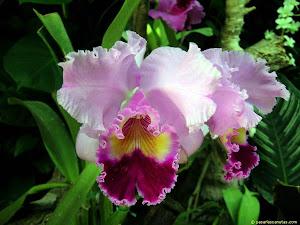 Cicudad de las Orquideas