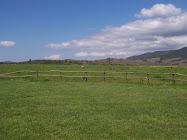 Loncomilla (San Javier)