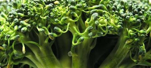 Ljekovito bilje i ljekovite trave folna kiselina uva srce for Folna kiselina u tabletama