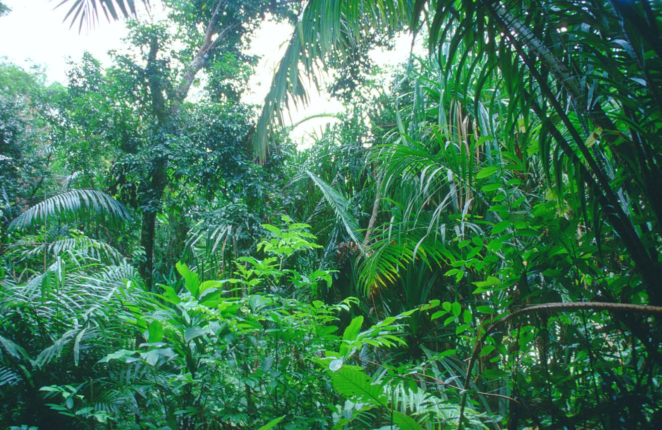 of rain forest species - photo #24