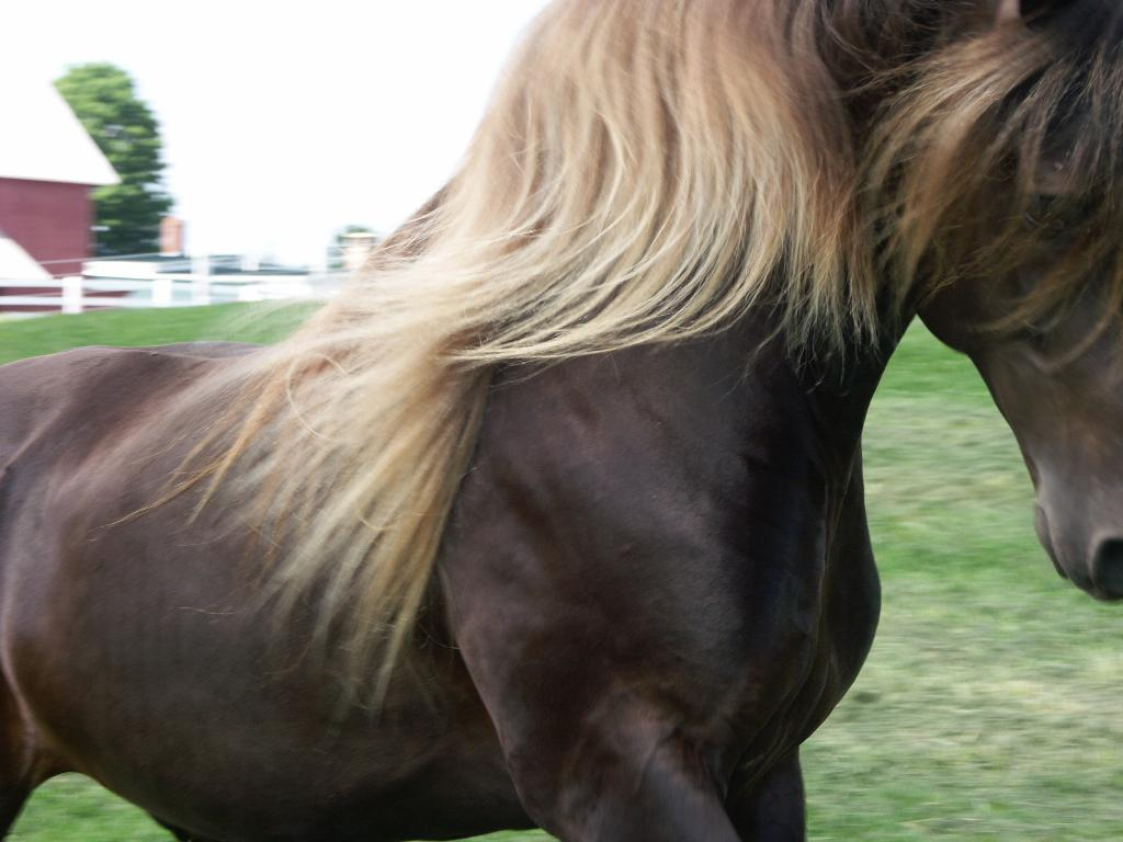 Pets Care Place: Grow Long, Thick, Luxurious Manes And