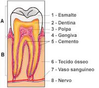 → Hipersensibilidade dentinária (dentes sensíveis) - tudo que você PRECISA saber!