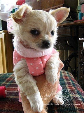 Make Chihuahua coat no-sew puppy dog sleeve sweater pattern