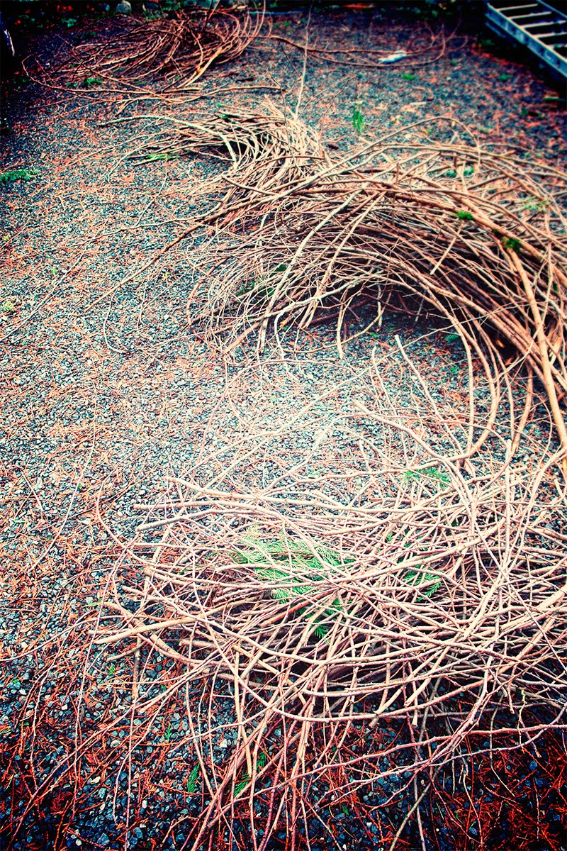 Adrien Deggan S Blog Building A Giant Nest With The